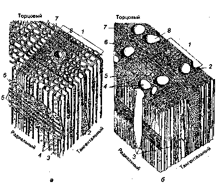 Строение древесины