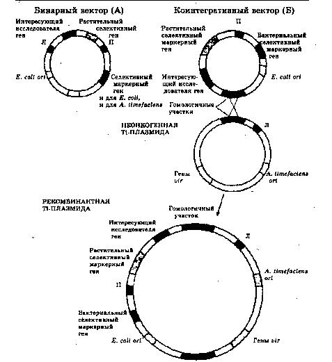 Схема генетической